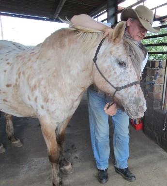 pferde verstehen umgang und bodenarbeit
